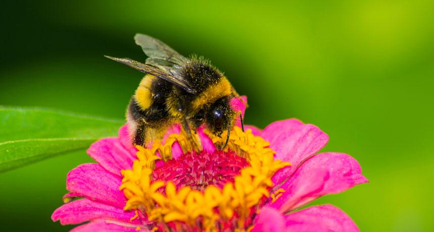 bees-flowers-header