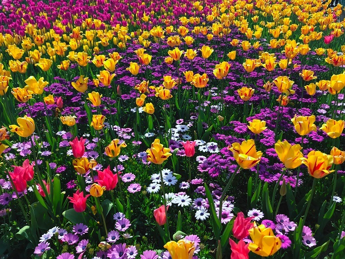 WOW KOREA: Take a Best photo at the 2018 Goyang Flower Exhibition